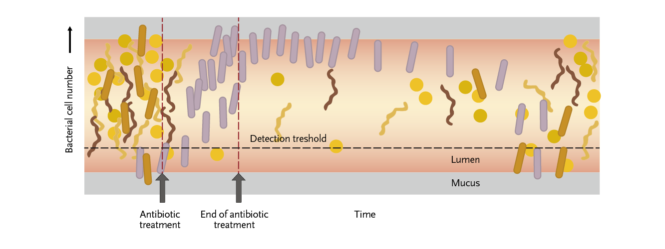 Figure 2: Antibiotics can have a profound impact on the intestinal microbiota.
