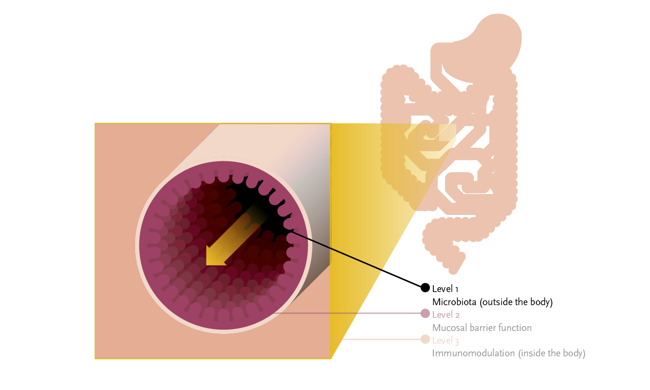 Figure 1: Ecologic® AAD is a multispecies probiotic developed to prevent intestinal microbiota disturbances (level 1) and hereby antibiotic-associated side effects such as AAD.